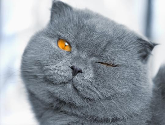 В помете рождаются котята