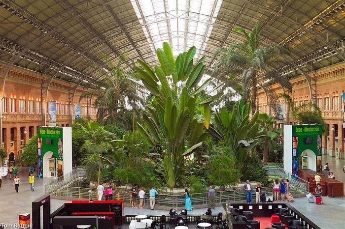ботанический сад на вокзале аточа мадрид 2 (700x466, 169Kb)