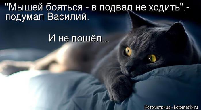 kotomatritsa_3N (700x382, 31Kb)