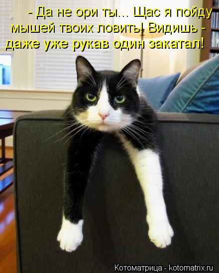kotomatritsa_Gj (440x550, 45Kb)
