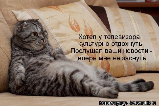 kotomatritsa_Qt (560x374, 42Kb)