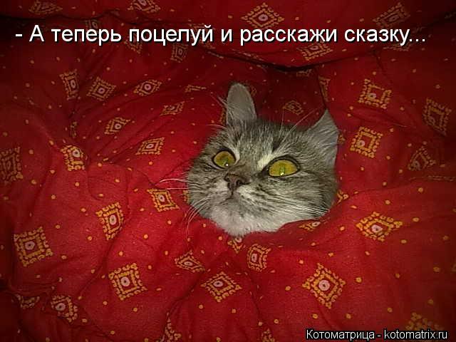 kotomatritsa_ub (640x480, 49Kb)