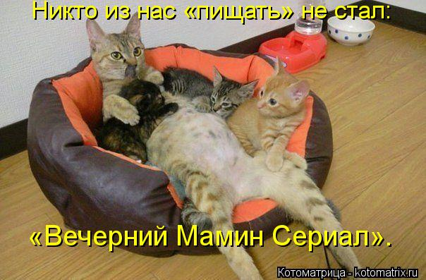 kotomatritsa_WG (604x397, 51Kb)