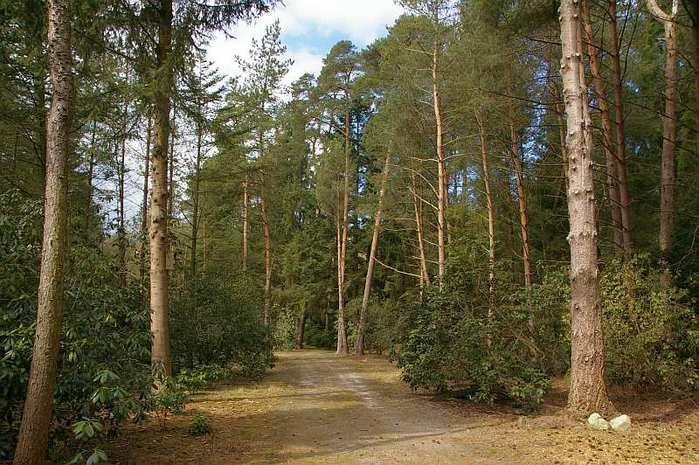 Рододендроновый парк-Westerstede Rhododendronpark. 72216