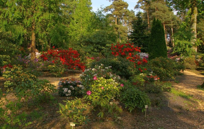 Рододендроновый парк-Westerstede Rhododendronpark. 91339