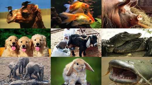 Распространенные заблуждения о животных