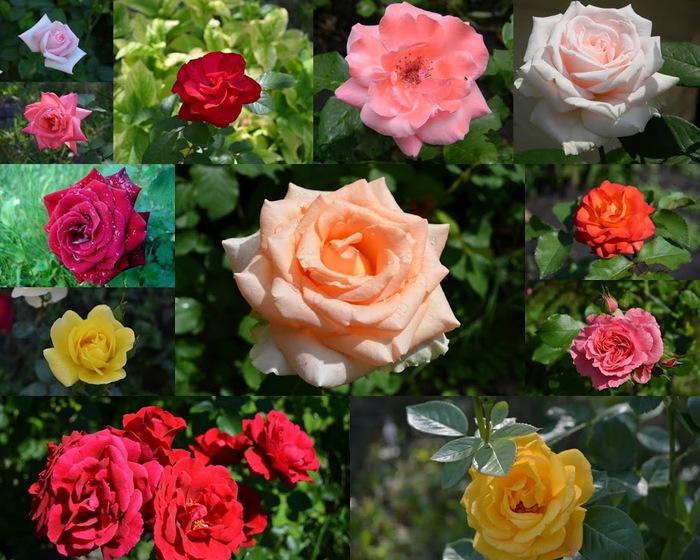 Розы (700x560, 142Kb)