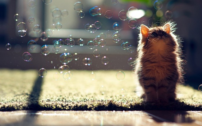 1356882582_cat_playing_with_bubbles_wallpaper_by_feliskachu-d5psawh (700x437, 79Kb)