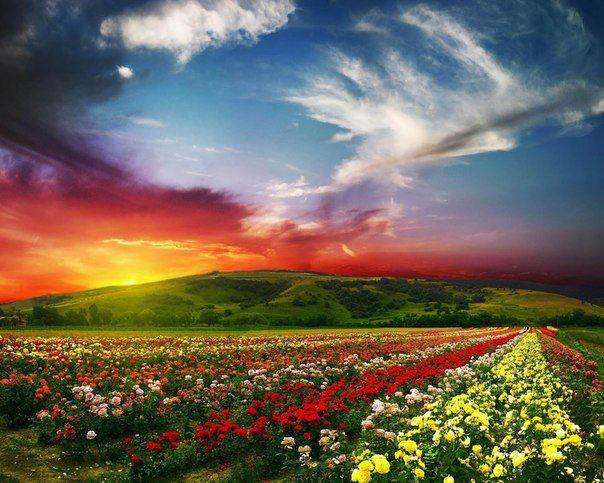 Долина диких роз (604x483, 66Kb)