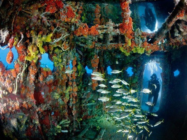 Затонувшее судно, Флорида, США (604x453, 91Kb)