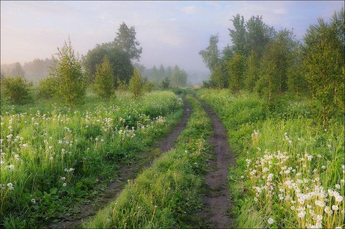 лесная поляна (700x465, 129Kb)