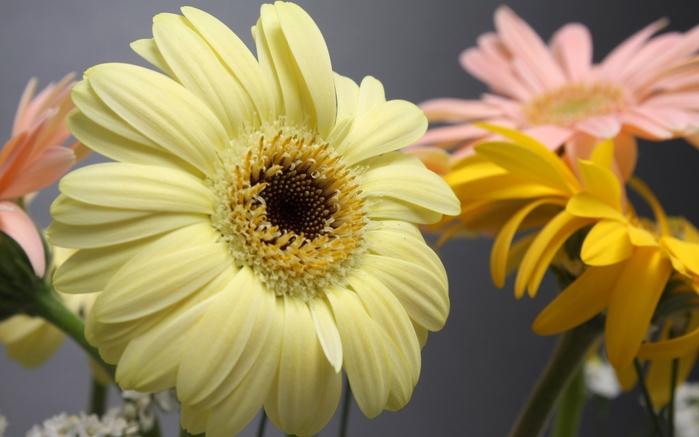 цветы (700x437, 187Kb)