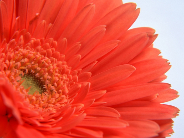 цветы  (700x525, 218Kb)