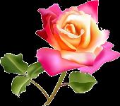 роза (170x150, 40Kb)