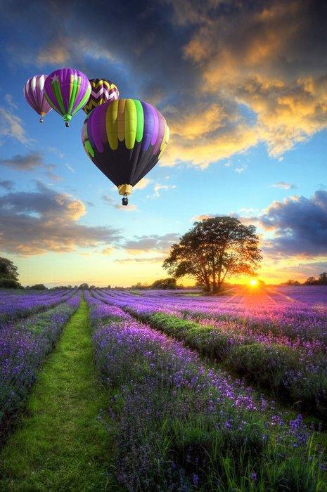 3303834_balloons_13 (465x700, 76Kb)