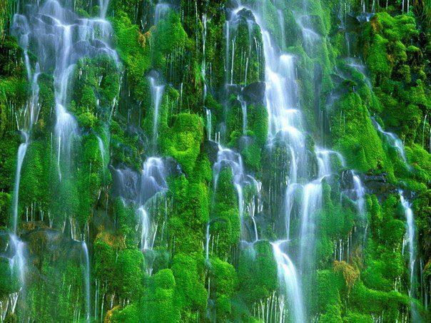 Мосбрай (Mossbrae) - уникальный водопад. Вода льется каскадом вниз по мшистым стенам каньона в Реку Сакраменто (самая длинная река Калифорнии) (604x453, 83Kb)