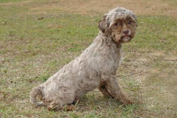 this_dog_has_a_man_face_01 (700x466, 57Kb)