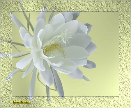 нежный-цветок (450x373, 249Kb)