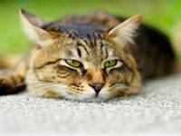 Кот мудрый (200x150, 31Kb)