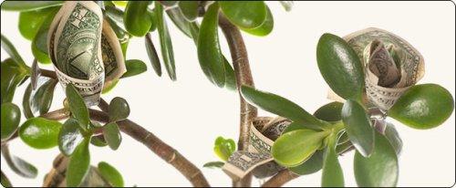 денежное-дерево1 (500x206, 27Kb)