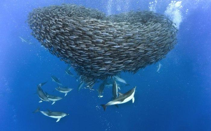 дельфины фото (700x437, 64Kb)