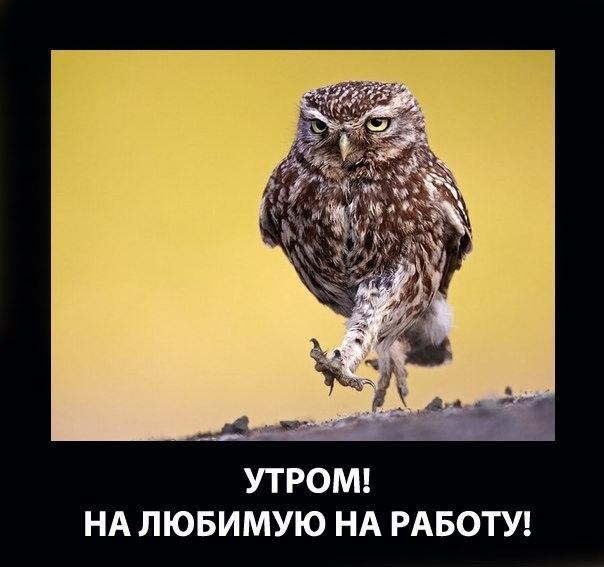 3821971_ytro_rabota (604x567, 116Kb)
