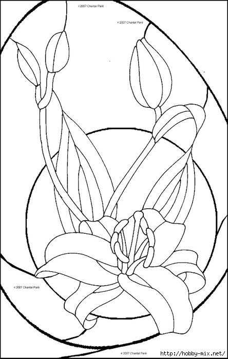 4asiaticlily (444x700, 151Kb)