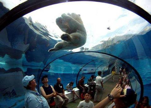 Посетители зоопарка Детройта наблюдают за купающимся полярным медведем из специального батискафа в Роял Оук, Мичиган (480x345, 30Kb)