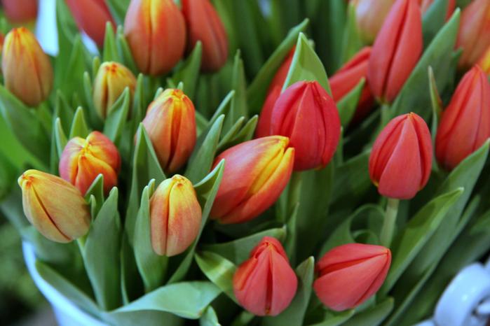 пр.цветя-10 (700x466, 349Kb)