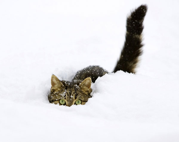 cats-and-snow-4 (600x475, 21Kb)