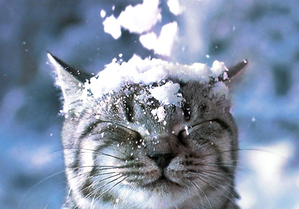 cats-and-snow-11 (600x419, 56Kb)