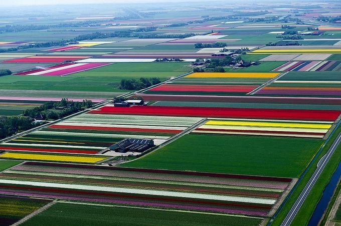 поля тюльпанов фото (680x451, 81Kb)