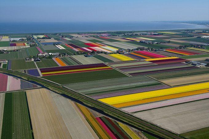 поля тюльпанов фото 2 (680x451, 71Kb)