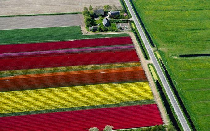 поля тюльпанов фото 5 (680x424, 73Kb)