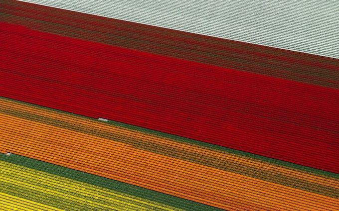 поля тюльпанов фото 7 (680x424, 79Kb)