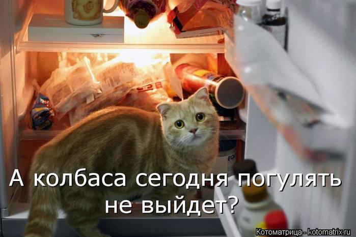 kotomatritsa_1 (700x466, 47Kb)