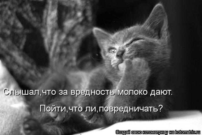 kotomatritsa_Gb (700x466, 43Kb)