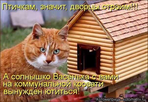 kotomatritsa_o2 (604x415, 78Kb)