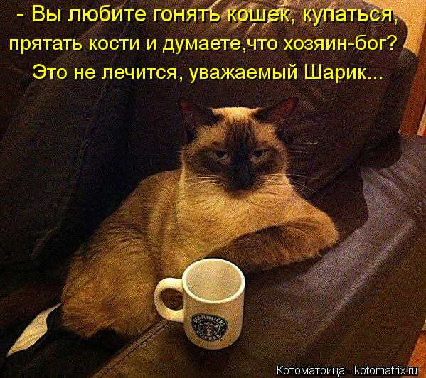 kotomatritsa_Rm (599x532, 89Kb)
