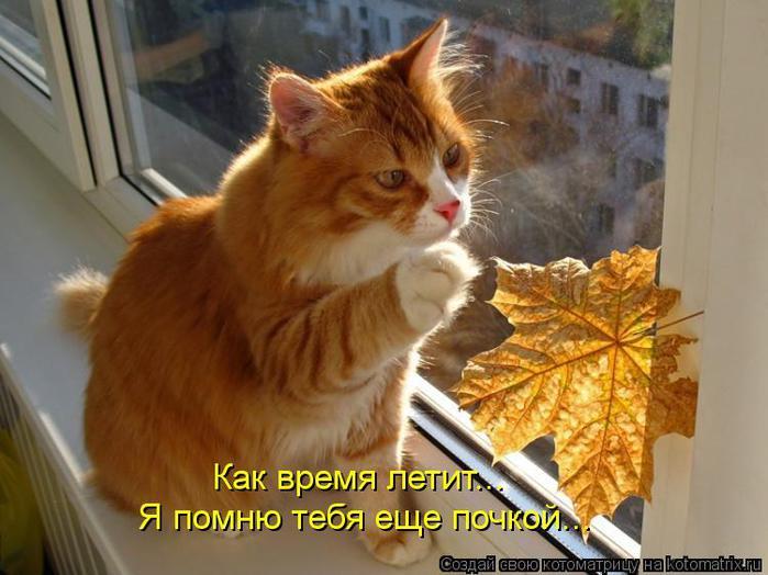kotomatritsa_VX (700x524, 54Kb)