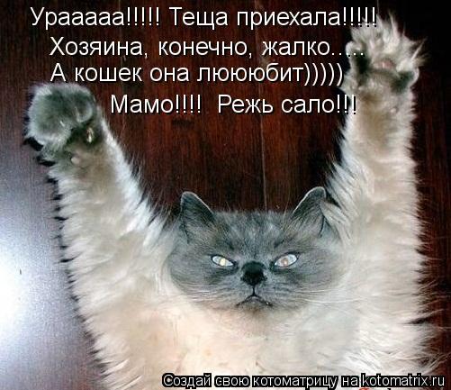 kotomatritsa_zQ (501x433, 48Kb)