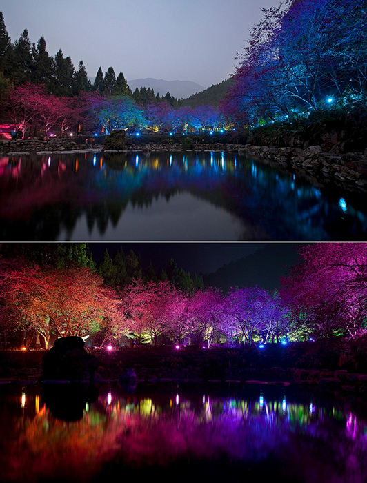 4121583_Cherry_Blossom_festival_2 (532x700, 258Kb)