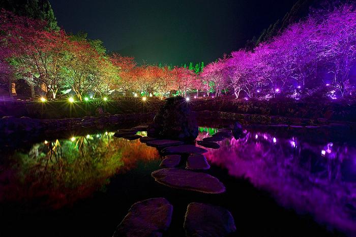 4121583_Cherry_Blossom_festival_4 (700x466, 276Kb)