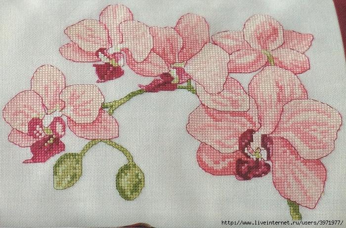 Вышивка крестом орхидея бесплатные схемы