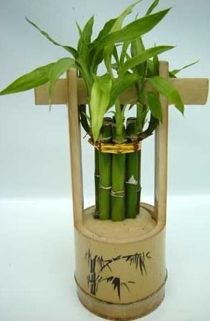 бамбук счастья (1) (296x453, 73Kb)