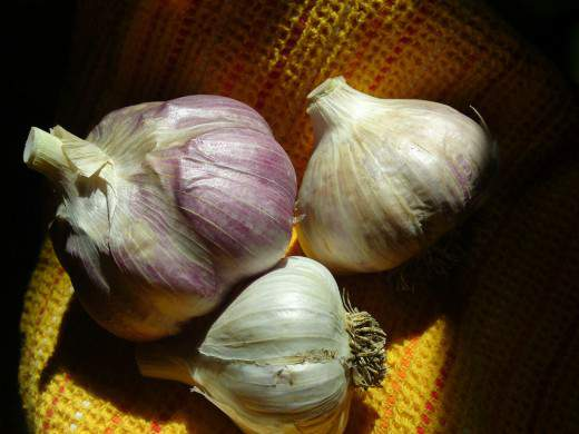 Garlic-520x390 (520x390, 25Kb)