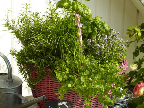aromatic-spice-herbs-decoration2-5 (600x450, 124Kb)