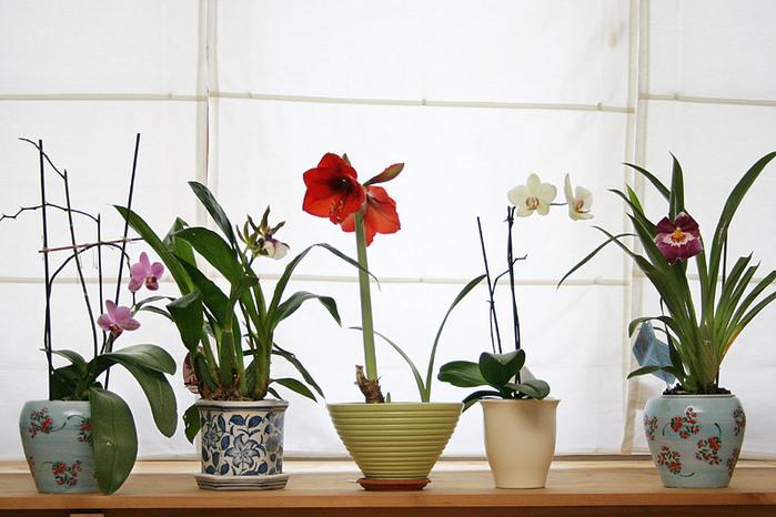 Дикая орхидея 3 онлайн. Комнатные цветы.