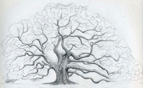 как нарисовать дуб при