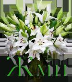 букет белых лилий (150x169, 53Kb)